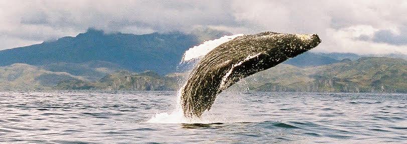 Fish Kodiak Adventures Alaska Whale Watching